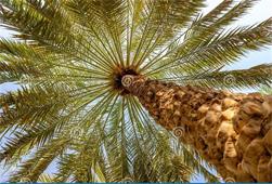Al Ain City Tour - An Oasis City of Abu Dhabi Emirate